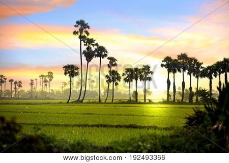 Paddy fields landscape with in India