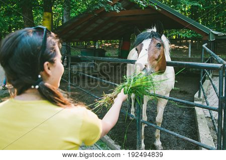 young woman feeds horse on the farm with grass