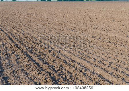 agriculture plowed field in spring