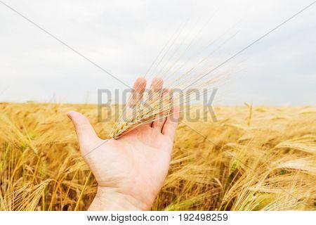 farmer show new crop over field