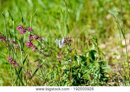 Sunny Meadow With Flowers And Butterfly