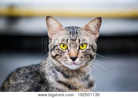 a beautiful eyes of pet,cat a looking