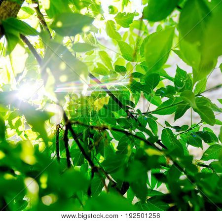 Fresh green tree leaves with sunlight ray. Natural composition. Summer concept. Closeup. Soft focus. Instagram size.