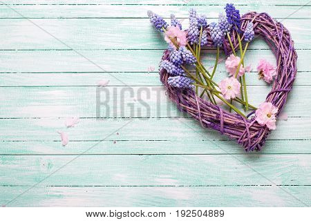 Big decorative heart and pink almond and blue muscaries flowers on turquoise wooden background. Selective focus. Top view. Place for text.