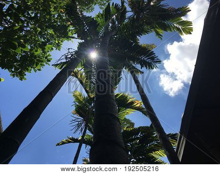 Silhouette, Look up at the palm tree, ant view.