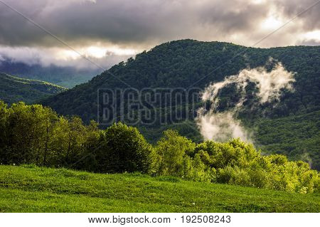 Forest On Hillside At Cloudy Sunrise In Mountains