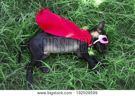 Canine Costume Dog Pet Puppy Superhero
