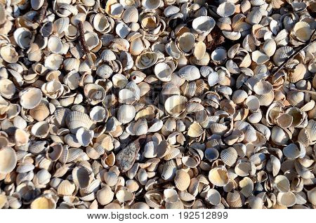 Shell beach, Kippford. This unusual beach is made up almost entirely of cockle shells. It is also known as the Rough Firth beach.