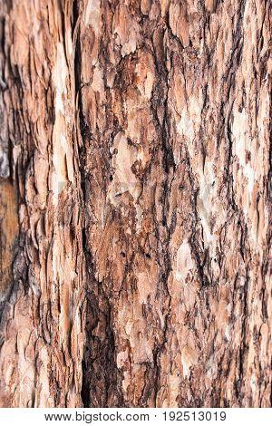 Fir bark background. Natural wood. Close up texture of bark background. Selective focus