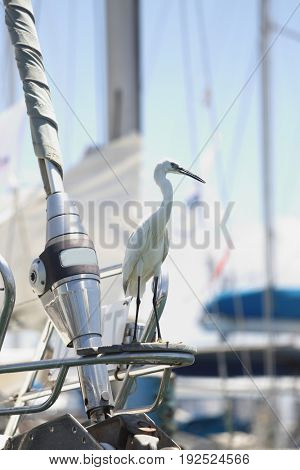The heron stands on the bow of a sailboat in the sea port of Akko
