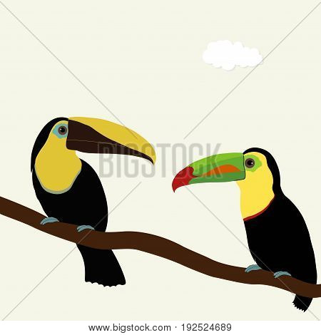Two toucan birds on a branch on white background