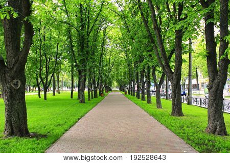 Beautiful city park with path and green trees