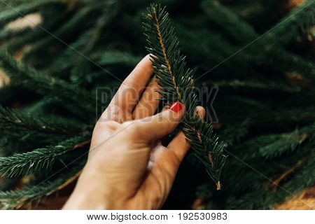 Hand Holding Green Fir Branch With Needles. Decorating Christmas Tree In Room. Home Preparation. Rus