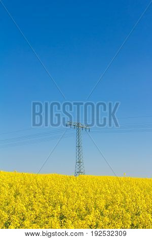Blossom Oilseed Rape Field In Springtime With Pylon