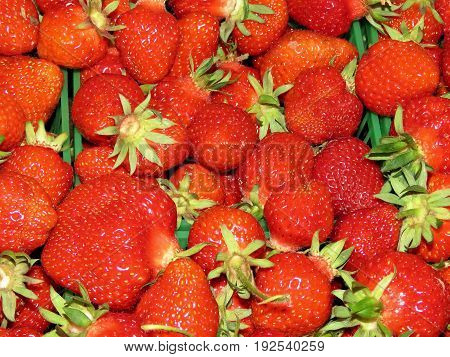 The strawberry on field in Markham Canada June 24 2017