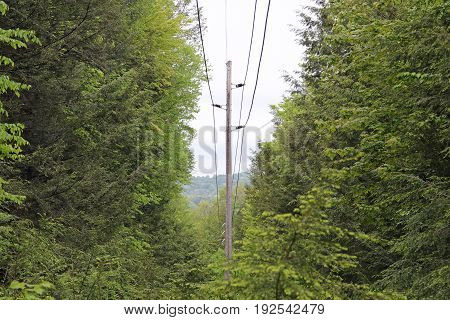 A powerline going down the hill and through the trees.