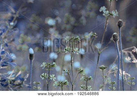 Floral blue background. Wildflowers on a bokeh background. Close-up. Soft focus Nature.