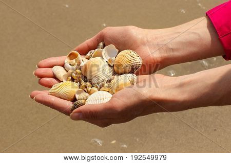 Seashells In Hand Of Woman At Beach By Sea, Summer And Vacation Concept