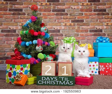 Two fluffy white kittens sitting on brown carpet next to small christmas tree with yarn ball and toy mice decorations. Colorful presents with bows and countdown to Xmas blocks. 21 days til.
