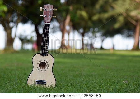 ukulele on nature background,ukulele close up,music concept
