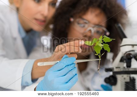 Female Scientists Examine Plant Working In Genetics Laboratory Study Research, Two Women Analyze Scientific Experiments In Lab