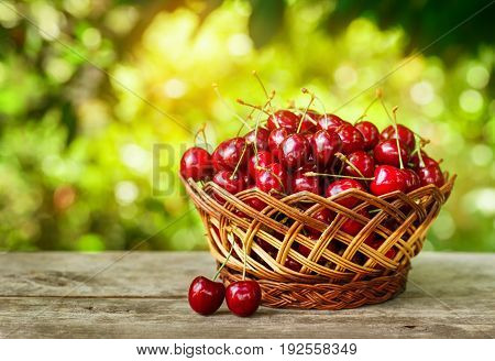 cherry basket. Ripe cherries in wicker basket on wooden table with with sunshine blurred natural background. Gardening and harvest concept. Healthy summer fruit