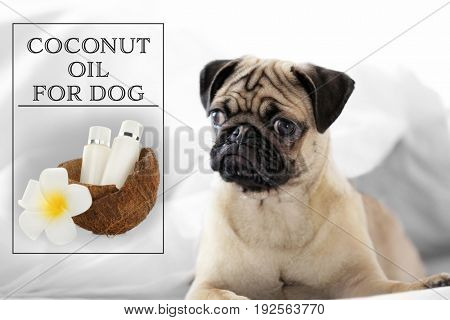 Pet care concept. Dog and bottles of coconut oil with shell on blurred background