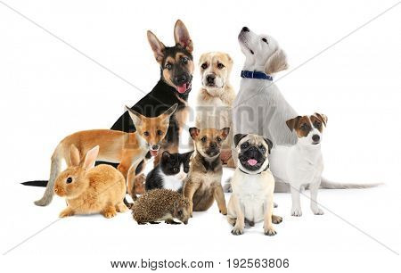 Cute baby animals on white background