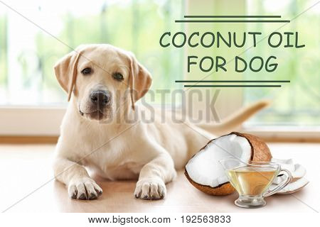 Pet care concept. Puppy and sauceboat of coconut oil with nut on blurred background