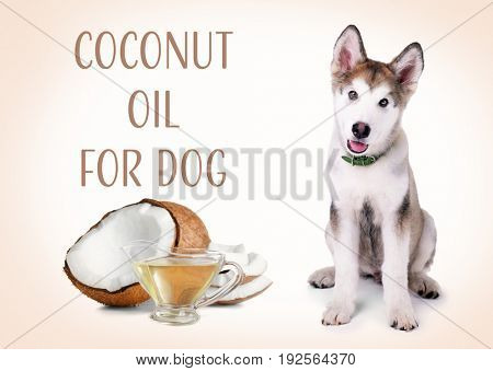 Pet care concept. Cute puppy and sauceboat of coconut oil with nut on color background