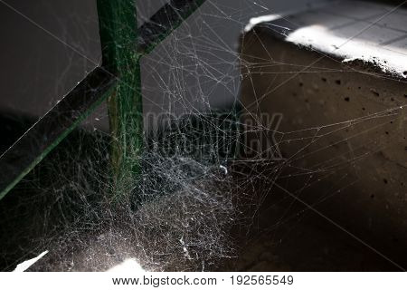 Spider web in sunlight macro. Photo can be used as a whole background.