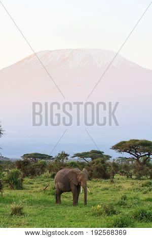 View of Kilimanjaro Mountain from Kenya. Eastest Africa