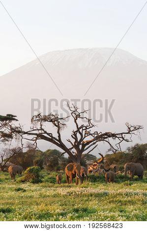 View of Mount Kilimanjaro. Kenya, Eastest Africa