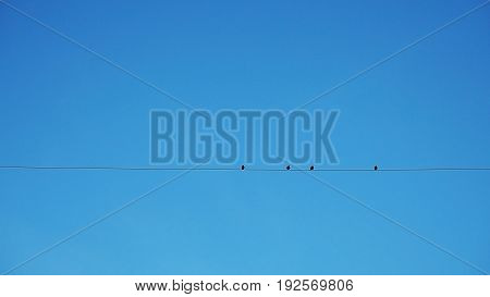 Silhouette of four birds resting on wire against the background of blue sky
