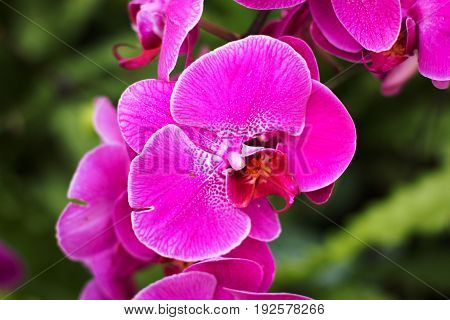 Purple orchids Violet orchids. Orchid is queen of flowers.