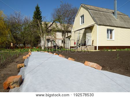 Voronezhб Russia - April 30б 2017: Seedbed covered with cover material in the garden plot