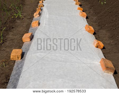 Application of a covering material on an earthen bed to protect seedlings