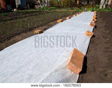 White covering materials spread out on the ground to protect the seedlings from the cold