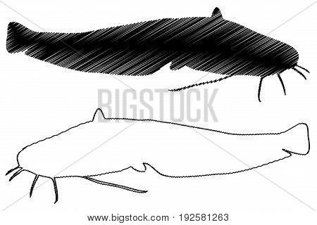 catfish silhouette vector , ( Silurus glanis )