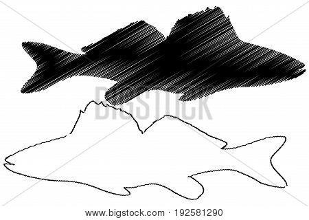 zander silhouette vector , ( Sander lucioperca )
