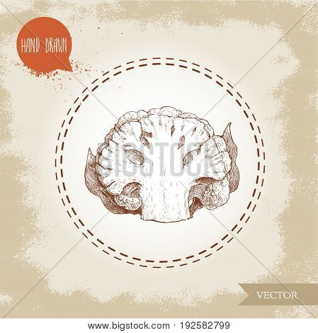 Hand drawn sketch style half of cauliflower. Vector eco food illustration isolated on grunge old background.