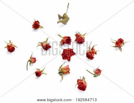 oil draw red rose dry fall fowers isolated element paint object set