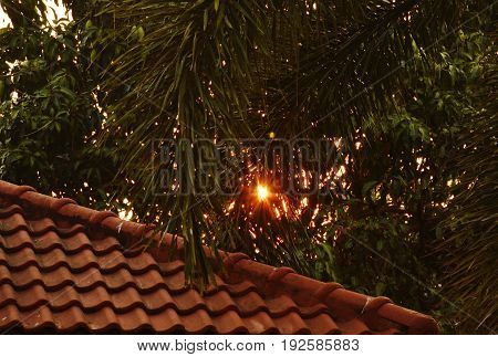 sunrise spreading after palm leaf and home roof tile on morning