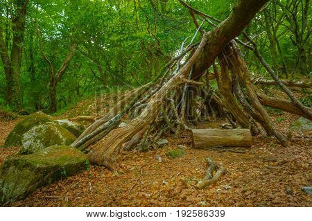 Logs lying against a fallen tree in the woods.