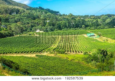 Aerial view of a farm winery in green grapevine, Constantia, Cape Town, South Africa. The Constantia Wine Valley is the most spectacular wine experience in the world with a unique blend of wine.