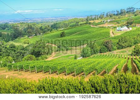 Aerial view of a farm winery in green grapevine. Constantia Valley in South Africa. World famous Wine Route 15 mins from Cape Town.