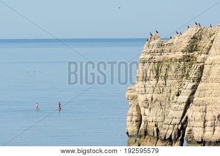 Flock of cormorants resting on a cliff while people enjoy paddling near village of Beer Jurassic Coast