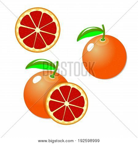 Set vector grapefruits. Cut pink grapefruits. Whole slice circle isolated on white background