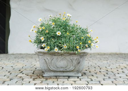 Green plant in a pot made of stone.