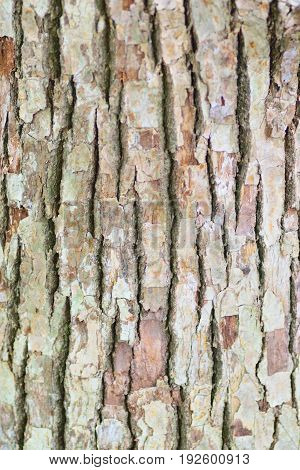 Texture of old wooden tree trunk in vertical frame